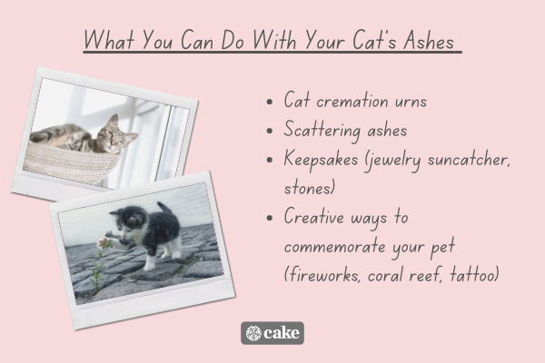 List of what you can do with your cat's ashes with images of cats