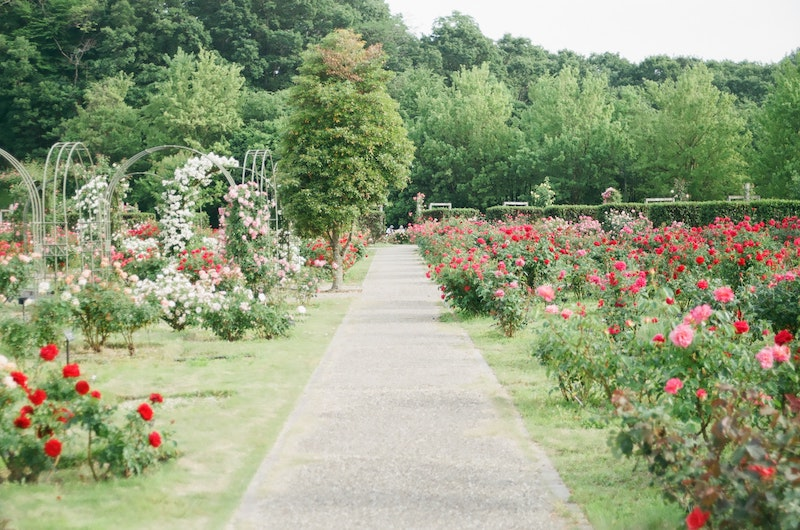24++ Scattering garden near me info