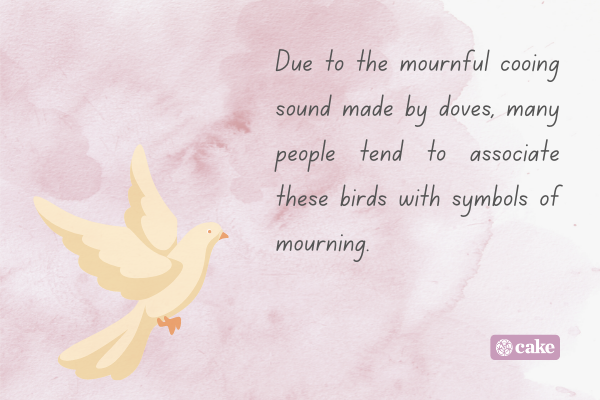 Fact about what doves symbolize with an image of a dove