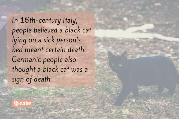 Text over an image of a black cat
