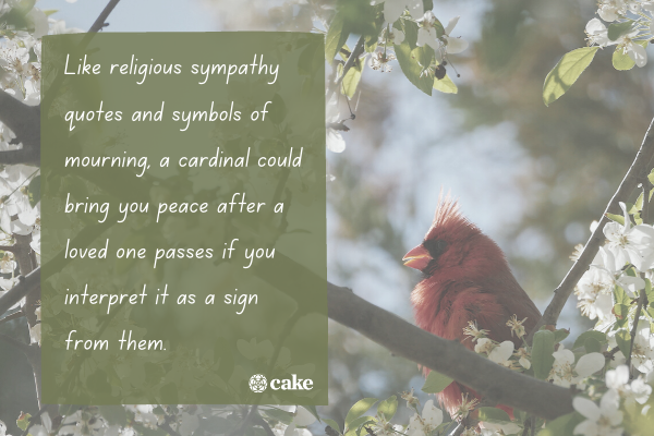 Text about what it means when we see a cardinal with an image of a cardinal in the background