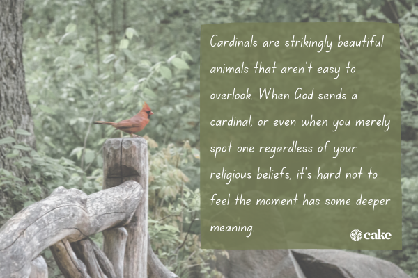Text about what seeing a cardinal could mean for us with an image of a cardinal in the background